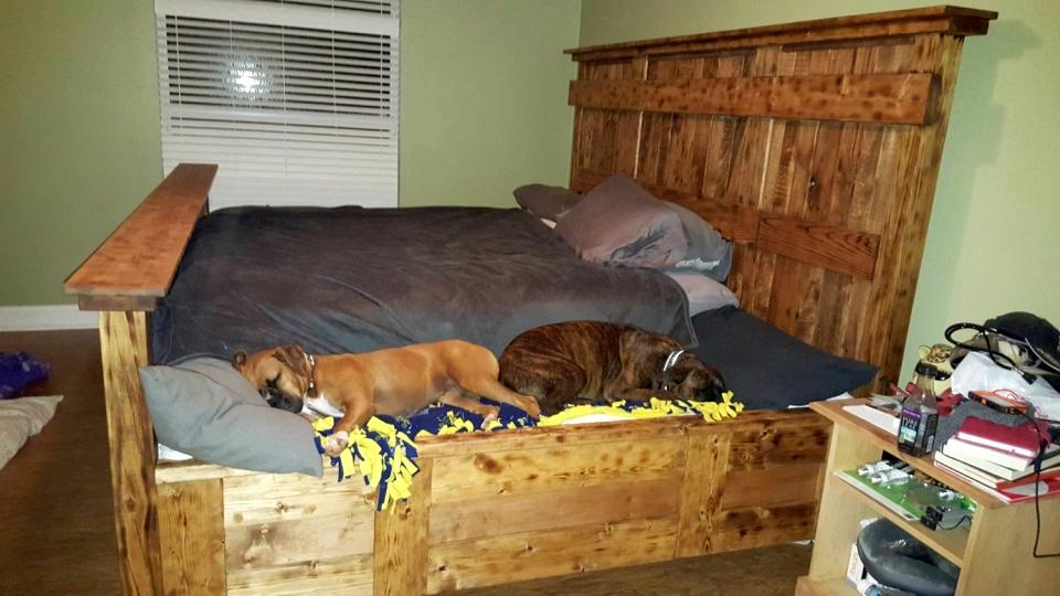 Разрешать ли собаке спать на кровати? — точного ответа нет.