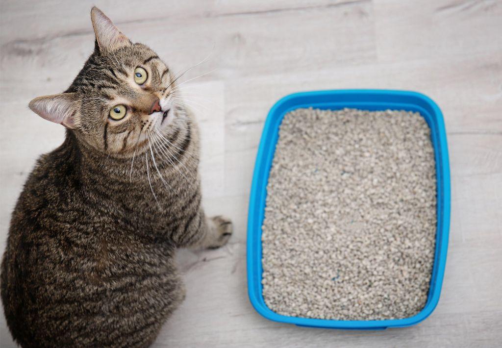 Почему кошка перестала ходить в лоток? — основные причины