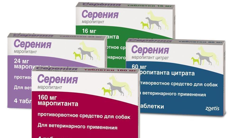 Вермидин для кошек: показания к применению, рассчет дозировки и побочные явления +фото и видео