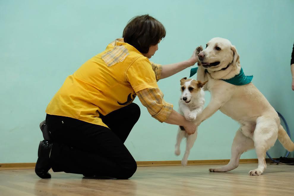 Как научить собаку (щенка) команде «сидеть!»