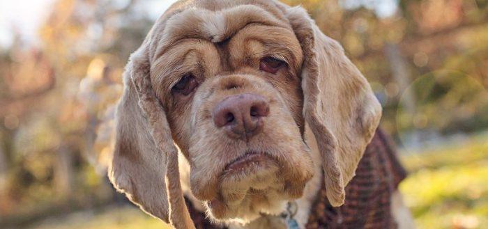 10 самых древних пород собак в мире
