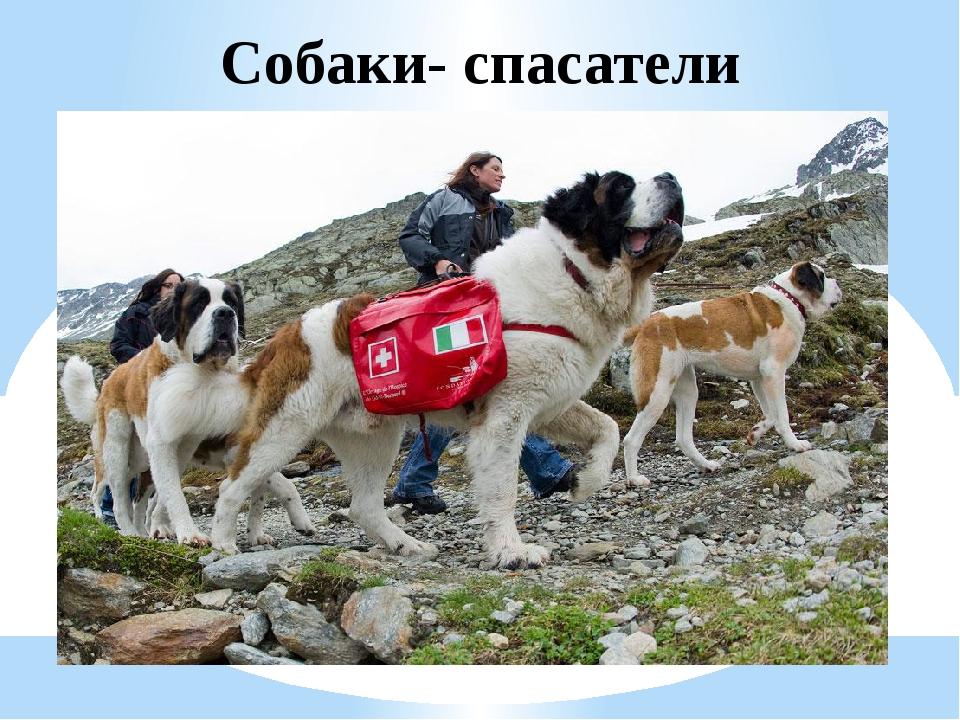 Сторожевые породы собак: список представителей с фотографиями, названиями, описаниями и ценами