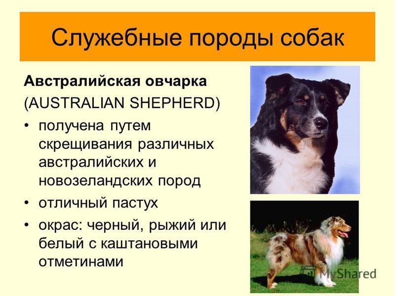 Спортивно служебные собаки породы