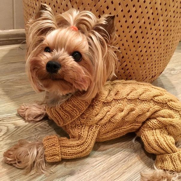 Как связать одежду для собаки своими руками: схемы с описанием, снятие мерок