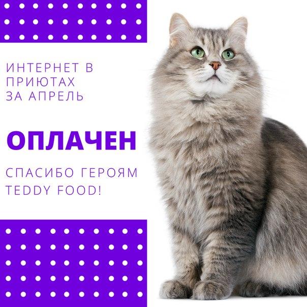 TEDDY FOOD — социальный сервис для усатиков