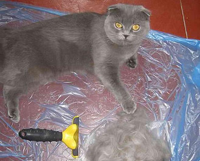 Кошка сильно линяет: что делать?