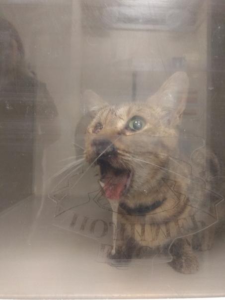 Кошка или кот в доме — приметы и суеверия