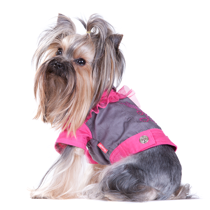 Йоркширский терьер - описание, питание щенка, фото и видео