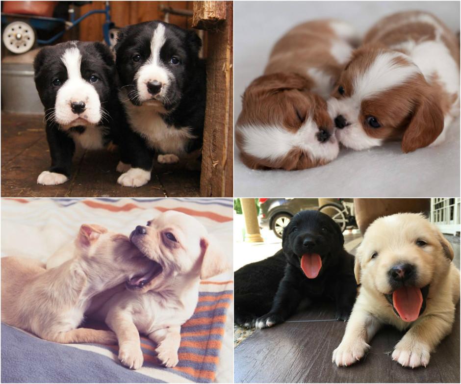 Самая дешевая собака: топ-10 недорогих пород маленьких питомцев - их цены и особенности характера