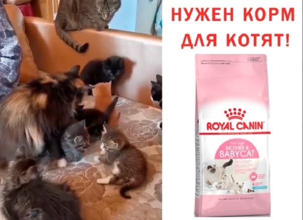 Как заработать на своём коте или кошке $180 000   pammtoday