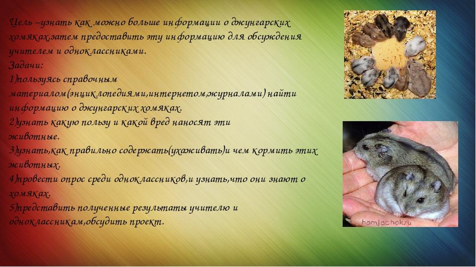 Как кормить хомяков: 10 шагов (с иллюстрациями)