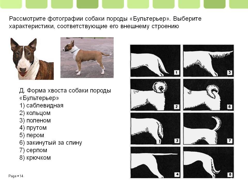 Как определить возраст собаки или щенка