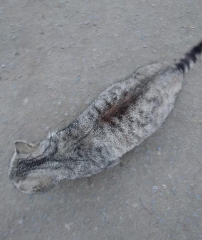 Как отличить домашнюю кошку от уличной