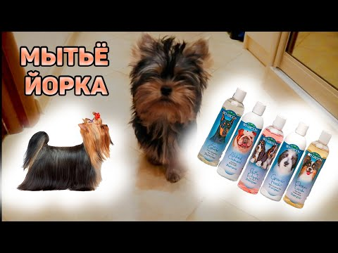 Шампунь для йорков: обзор косметики для собак, специфические особенности использования, советы кинологов