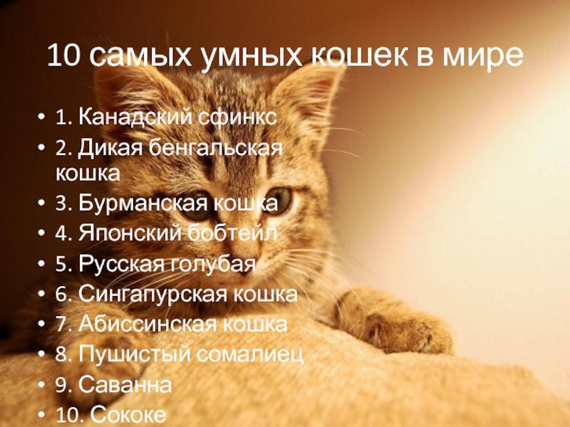 ᐉ породы кошек с высоким интеллектом - zoovet24.ru