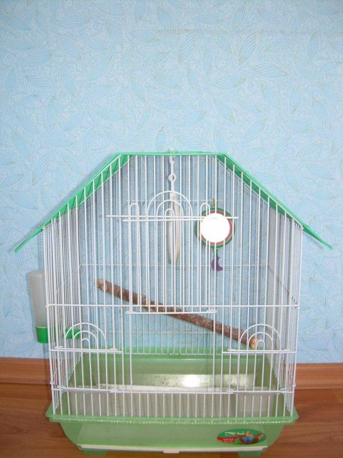 Как обустроить клетку для попугая - что должно быть?