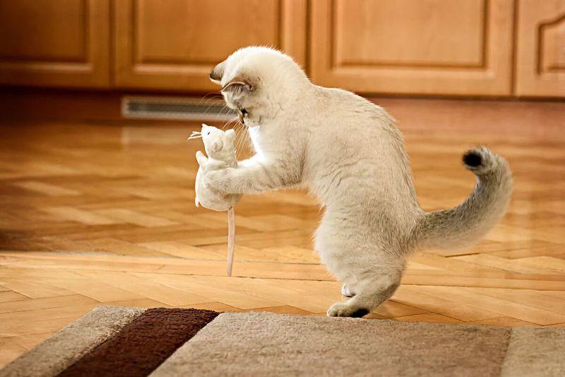 Как похвалить кошку за хорошее поведение