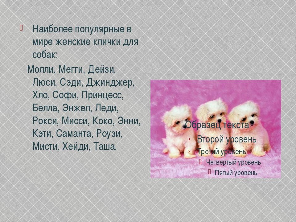 Клички для собак маленьких пород: мальчиков, девочек