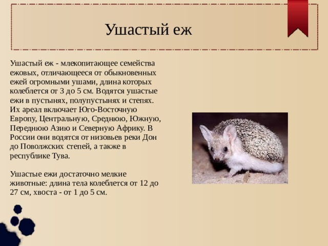Обыкновенный еж. полное описание, образ жизни, ареал обитания, размножение, польза для человека