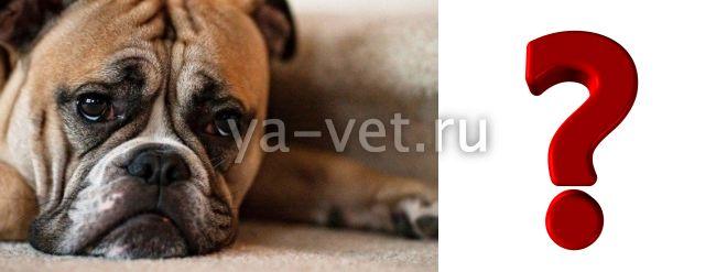 Энтероколит у собаки: симптомы и лечение