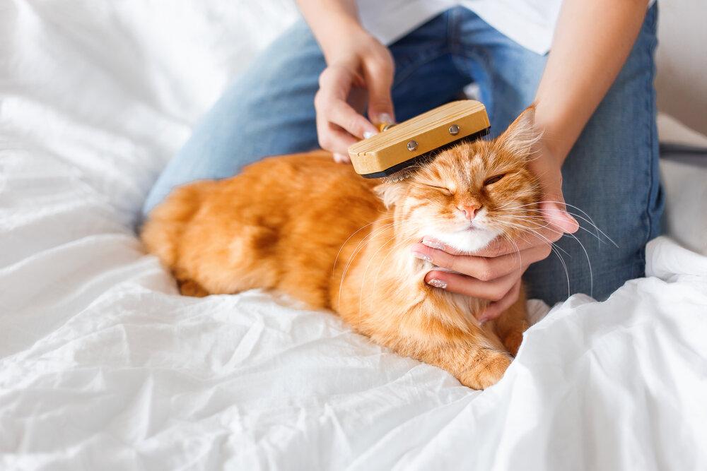 Почему кошка сильно линяет? рассказываем, как с этим бороться: новости, кошка, животные, здоровье, питание, домашние животные