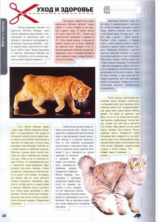 Курильский бобтейл ???? фото, описание, характер, факты, плюсы, минусы кошки ✔