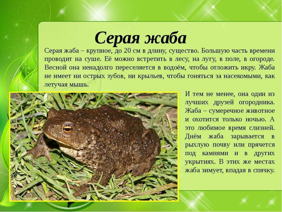 Земляная жаба: описание, среда обитания, сколько живет