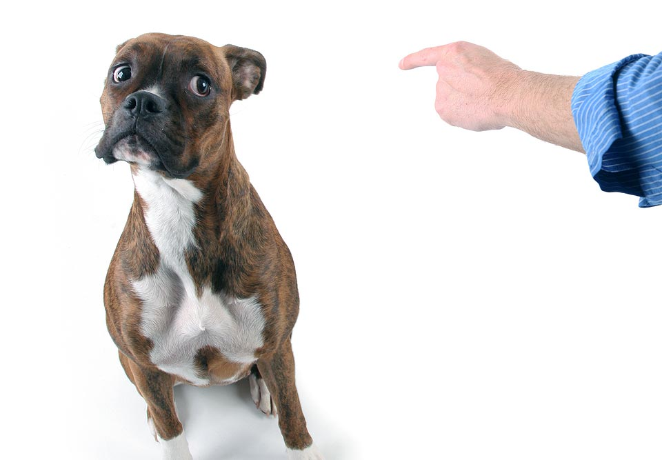 Наказание для собаки. как наказывать собаку за непослушание. как ругать щенка