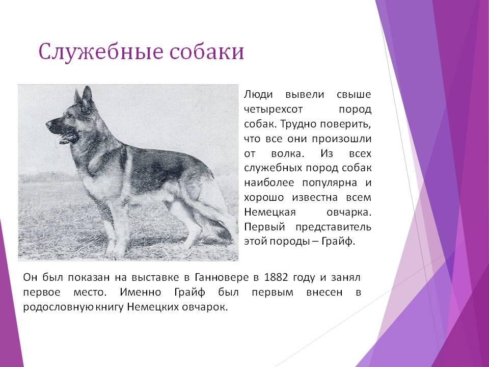 18 самых популярных пород служебных собак