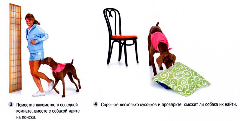 Как научить собаку командам: подготовка и основные команды