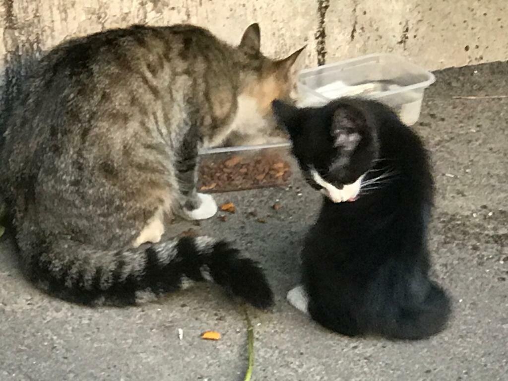 Как сделать ловушка для кошек схема. ловим кота при помощи ловушек из подручных материалов. лучшая приманка для кошки