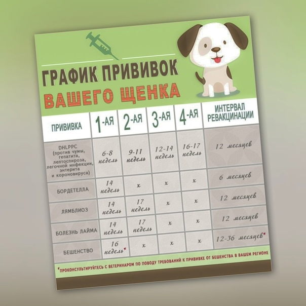 Вакцинация щенков. зачем вакцины молодым собакам? оптимальная схема вакцинации щенка? когда ставить препарат? как подготовить питомца?