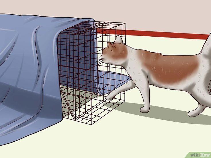 Как поймать кошку - wikihow