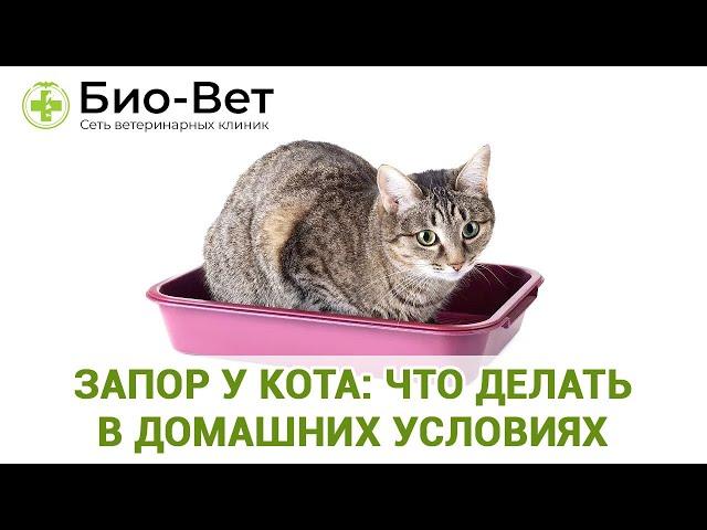 Заболевание пищеварительной системы у кошек - ветеринарная клиника нефрологии веравет. ветеринар на дом