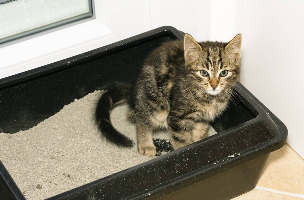 Почему кошка ходит в туалет мимо лотка