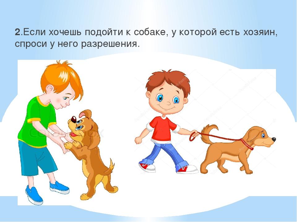 Адаптация собаки из приюта к новой семье - как проходит? wikipet.ru