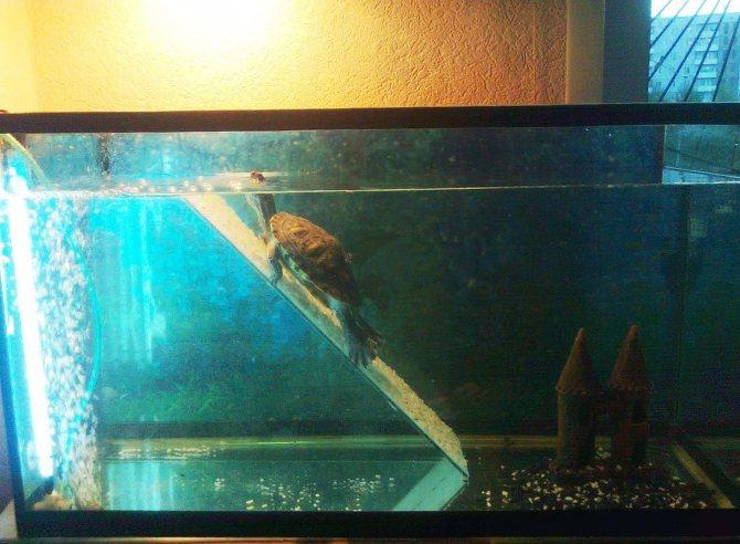 Вода для аквариума и её подготовка: 5 этапов подготовки
