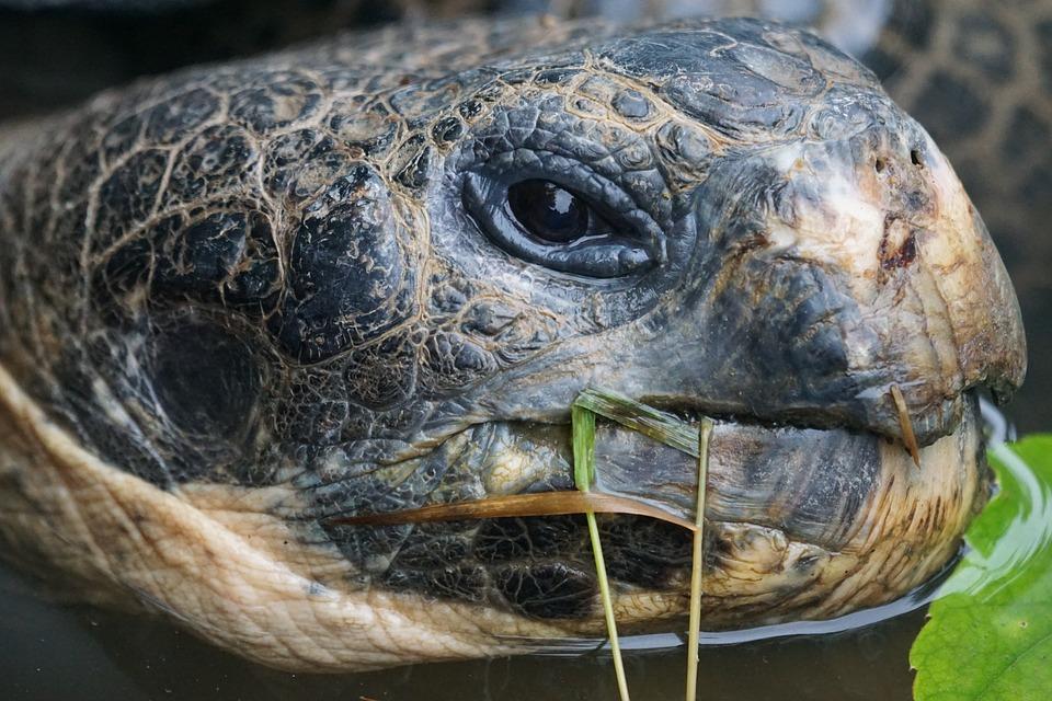 Виды черепах. описание, особенности, названия и фото видов черепах   животный мир