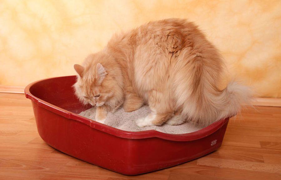 Как приучить кошку к лотку быстро и просто и не мучиться от запаха в доме