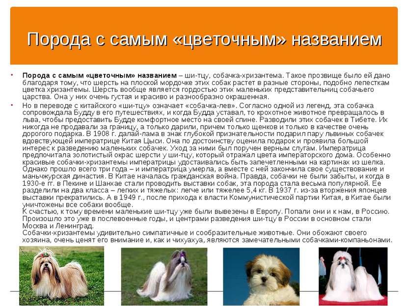 Список собак у которых вываливаются глаза