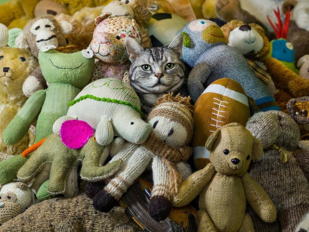 Усатый кодекс: 10 вещей, которыми обязательно занимается каждая кошка - 4 лапки