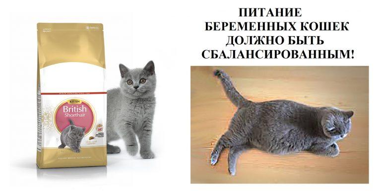 Можно ли давать лекарства от глистов беременной кошке