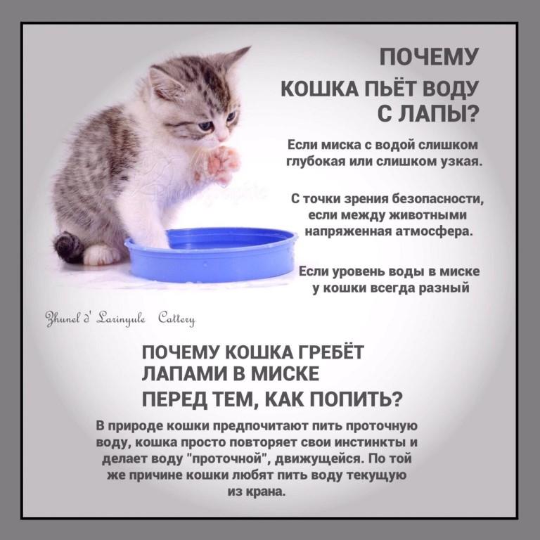 Почему нужно заставлять кошку пить больше воды