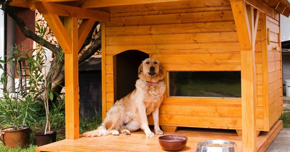 Будка для собаки: чертежи и размеры, этапы сборки, утепление. интересные идеи