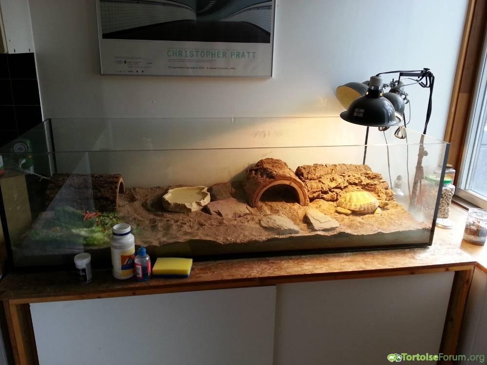 Террариум для улиток ахатин – как правильно обустроить жилище для моллюска