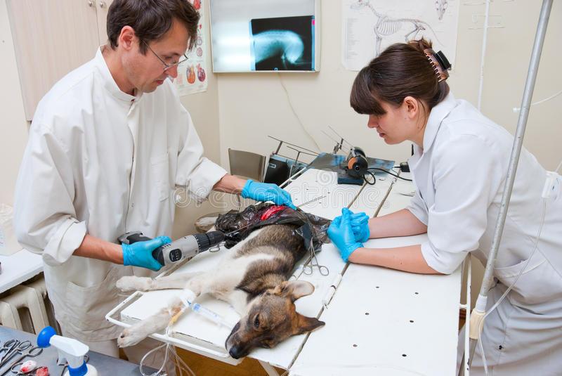 Болезни кошек: симптомы, лечение и профилактикаветлечебница рос-вет