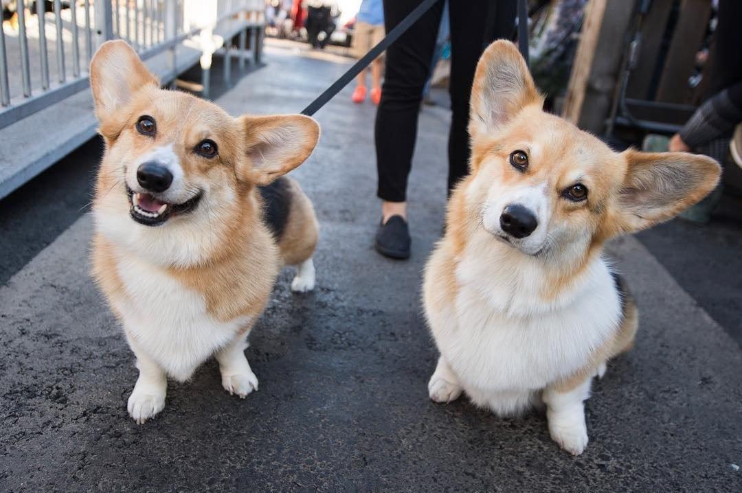 Самые глупые породы собак в мире