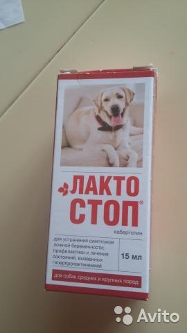 Когда назначается лакто-стоп для собак