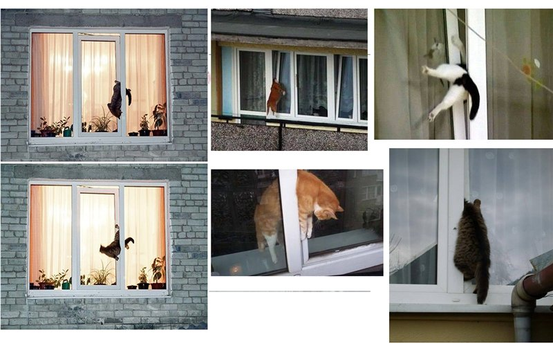 Приметы про кошек в доме: все народные поверья и их значение