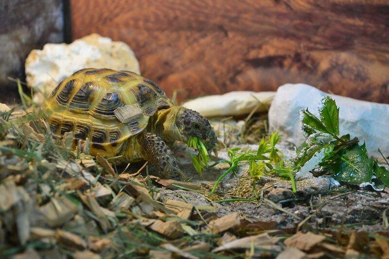 Что едят черепахи в домашних условиях: правильный рацион